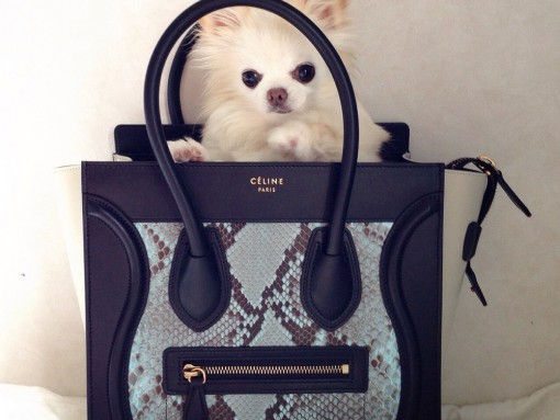 These 33 Pets and Designer Bags are a Match Made in Heaven