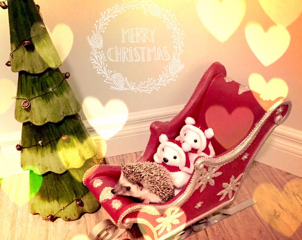 Merry-Chistmas-Hedgehog