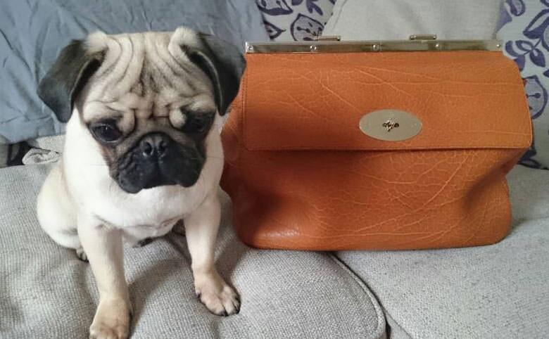 Pug-and-Mulberry-Bag