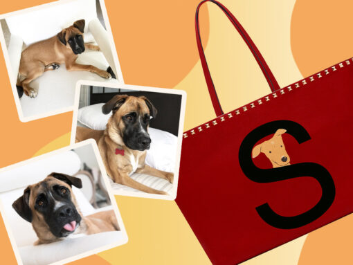 Exclusive: Valentino Launches Rockstud Pet